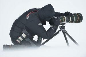 Shooting Reindeer in snowdrift. Adventdalen, Svalbard